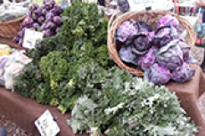 Farmers Market at the Alumni House